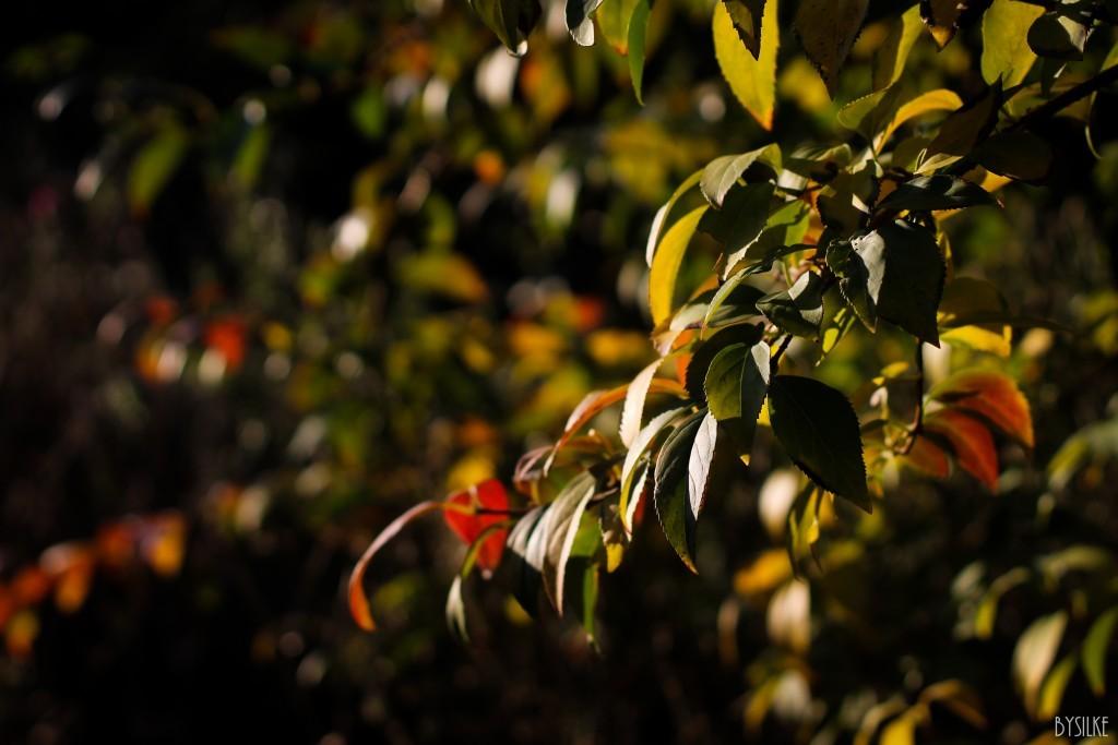 Herfstfoto's #2: De herfst in de tuin