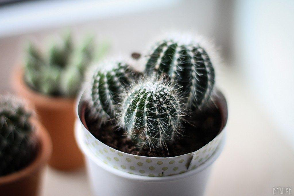 Fotografie  |  Plantjes in huis