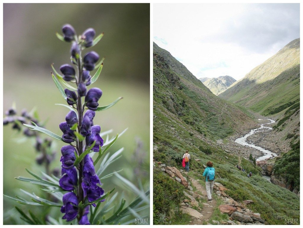 Reizen   |  Oostenrijk   |  Wandelen door weer en wind & een heksenhut in het bos