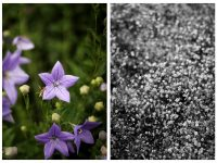 Bloemen minimalistisch