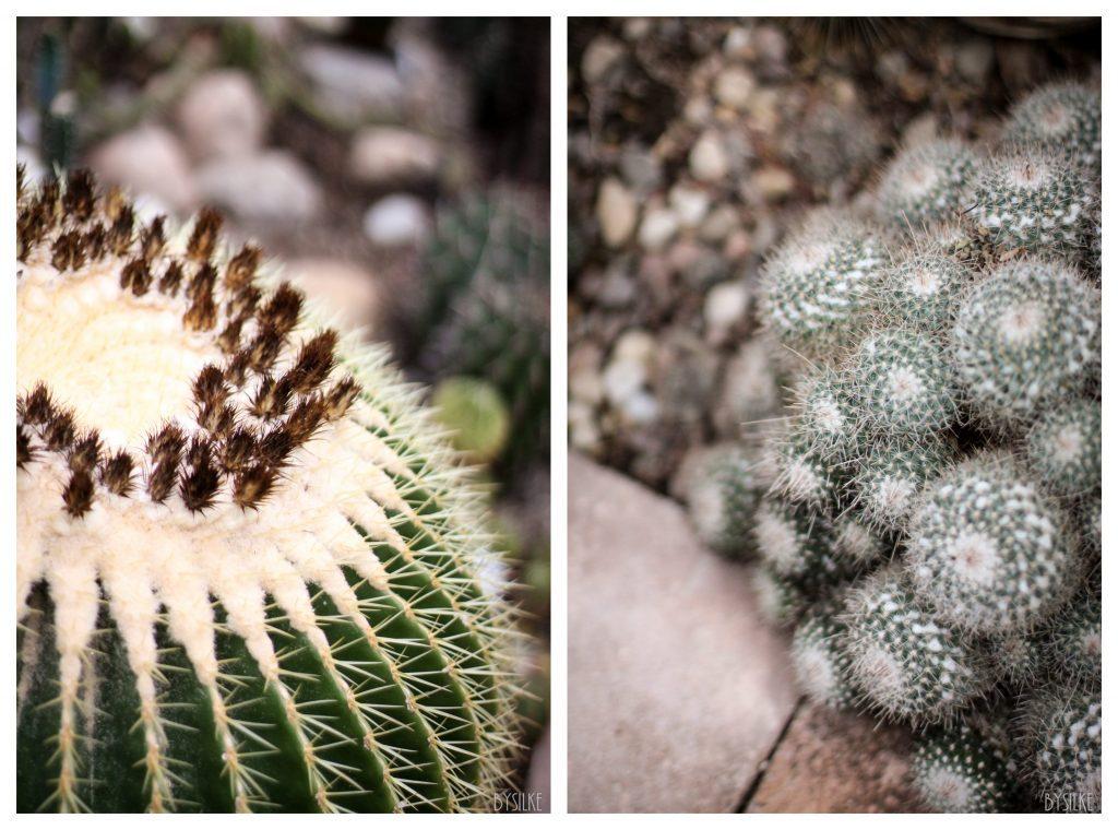 cactussen Gent