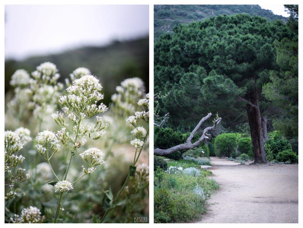 Daleccio Corsica